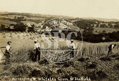 spc00076: Harvesting at Whiteley Green, Sheffield
